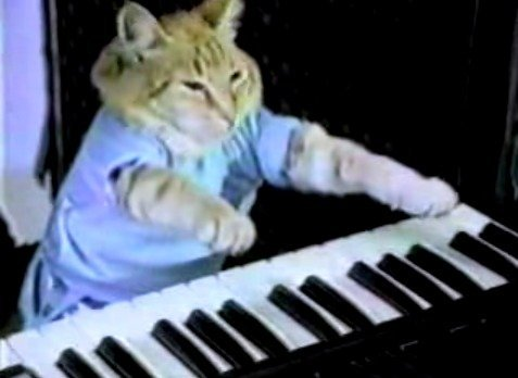 Cat_playing_piano
